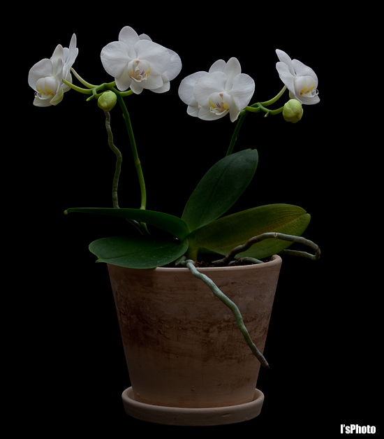 100215-Orchid-1.jpg