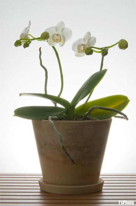 100206-Orchid1-2.jpg